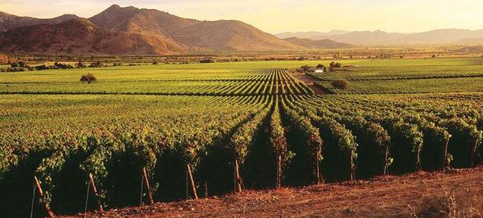 Montes_Alpha_Colchagua_Valley